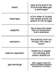 respiratory system here is a free respiratory system worksheet or
