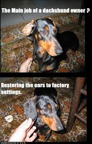 Weiner Dog Meme - dachshund owners i has a hotdog dog pictures funny pictures