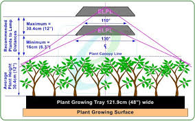 Hps Lights What Distance Should My Grow Light Be From My Plants