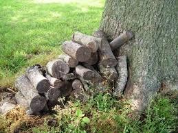 wood for pecan wood
