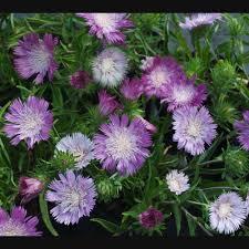 native georgia plants saul nurseries home
