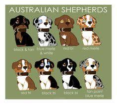 australian shepherd unique names real life pets red merle australian shepherd merle australian