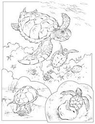realistic animal coloring pages realistic sea turtle coloring pages for adults animal coloring