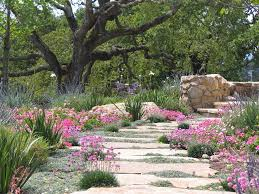 dymondia margaretae landscape modern with rock modern outdoor