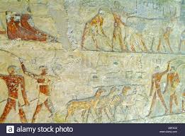 wall paintings tombs of nobles west bank of the river nile wall paintings tomb g6020 of iymery a 5th dynasty noble buried in the western cemetery near