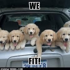 Dog In Car Meme - dogs