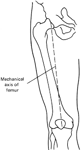 the musculoskeletal system the skeletal framework and its