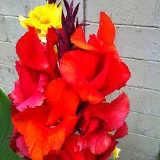 Backyard Gift Ideas 83 Best Backyard Ideas Images On Pinterest Backyard Ideas