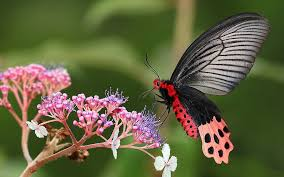 butterfly flower wallpaper butterfly flower grass plants wings 1920x1200