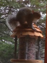 allen chimney sweep and wildlife removal