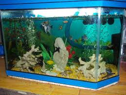 membuat filter aquarium kecil membuat filter aquarium sendiri tanpa kuras air selamanya
