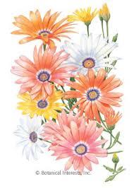 flower seed packets flower seeds flower seed packets perrenial annual heirloom