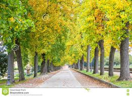Lucca Italy Map by Trees During The Autumn In Lucca Italy Stock Photo Image 80119253