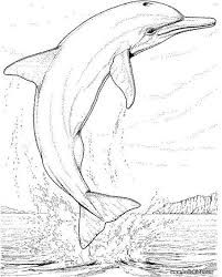 89 sea animals coloring pages images animal