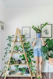the 25 best zz plant care ideas on pinterest