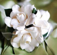 pin by ღwiℓℓemijnsℬrocanteℋoekjeღ on the scent of gardenia