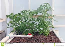 hydroponic greenhouse growing system stock photo image 42637917