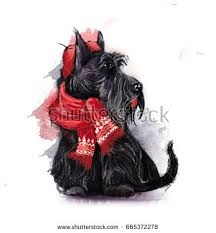 black scottish terrier wearing hat stock illustration