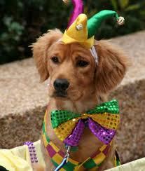 mardi gras jester ribbon dog mardi gras dogs 10 pictures mardi gras party mardi