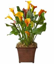 Fall Floral Arrangements You U0027re Going To Want All Of These New Fall Floral Arrangements