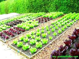 Garden Layout Planner Best Vegetable Garden Layout Plan Hydraz Club