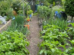 100 how to start landscaping your yard where to start with