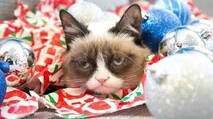 cat christmas grumpy cat christmas learntoride co
