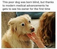 Googly Eyes Meme - believe in miracles dogs know your meme