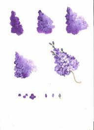 best 25 lilac flowers ideas on pinterest lilacs syringa