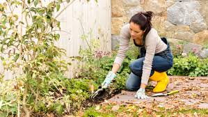 quotes about fall gardening how to garden today com