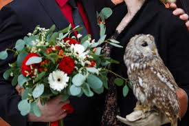 owl crashes into window at wedding video