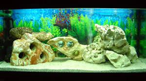 ghiaia per acquari malawi ciclidi acquario ciclide acquari peruzzi
