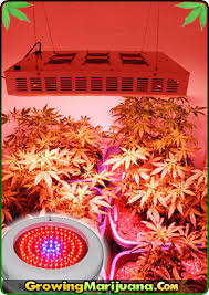 best light to grow pot led grow light review growing marijuana with led