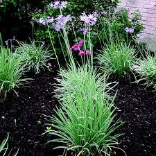society garlic austintexas gov the official website of the