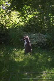your backyard wildlife habitat fall cleanup bird feeding and