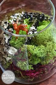 no fuss no water moss terrarium