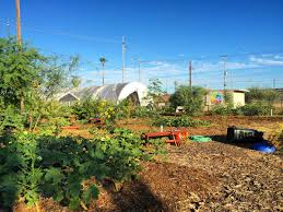 st vincent de paul urban farm harvests health and community green garden