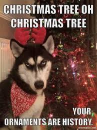 Christmas Dog Meme - naughty husky happy thoughts affinity sims