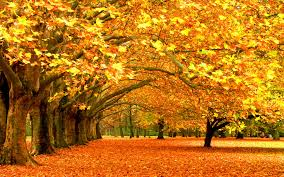 photo collection hd widescreen autumn wallpaper for phone
