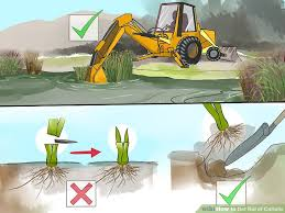 How To Cut Weeds In Backyard 2 Easy Ways To Get Rid Of Cattails Wikihow