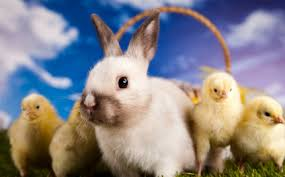 bunnies for easter 5 reasons why you shouldnt adopt a rabbit or for easter