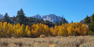 june lake fall colors u2013 2017 trip report san diego kayak club