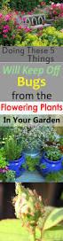 how to keep bugs off flowers 5 simple ways balcony garden web