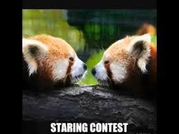 Funny Panda Memes - funny panda red panda memes youtube