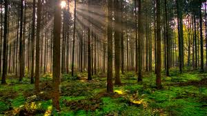 wallpaper tumblr forest nature trees mobile wallpaper landscape forest tumblr amazing