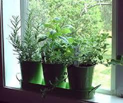 Indoor Herb Garden Light Indoor Herb Growing