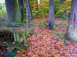 your favourite quote in french autumn leaves the story of the song french moments