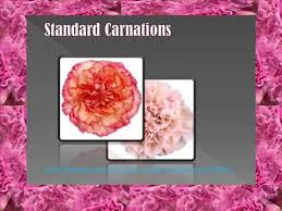 bulk carnations wondering where you can get bulk carnations without compromising