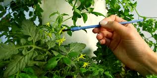 plant produces flowers but no fruit try hand pollination blog