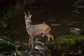 Low Light Photography Tips 5 Tips For Photographing Wildlife In Low Light Conditions